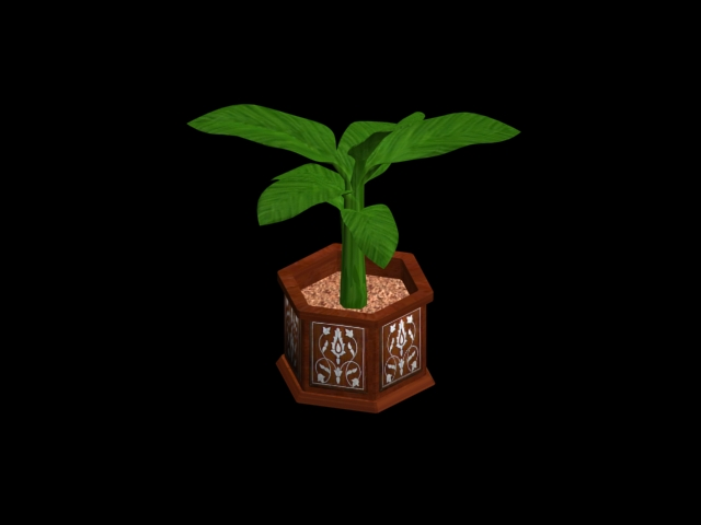 banana plant in moroccan pot