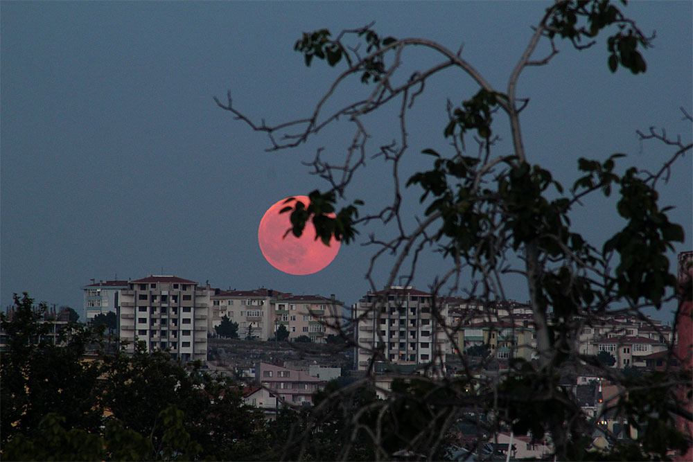 Rose moon rising...